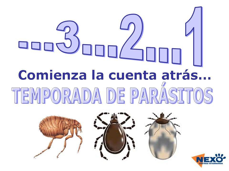 321 parasitos