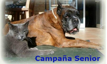 campaa senior